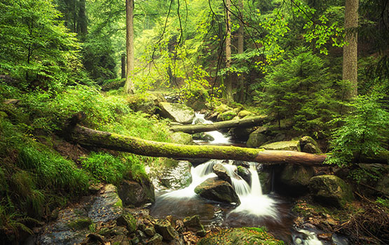 Naturpark Harz am Gästehaus Tanne Elbingerode